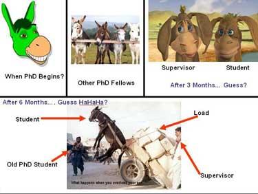 phD donkey